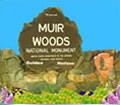 Muir woods Tours